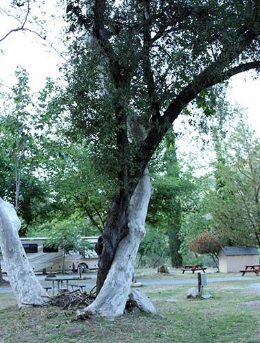 Tree-Hug-