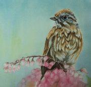 wc-sparrow-bird