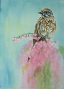 wc-sparrow-painting