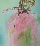 wc-sparrow-flowers