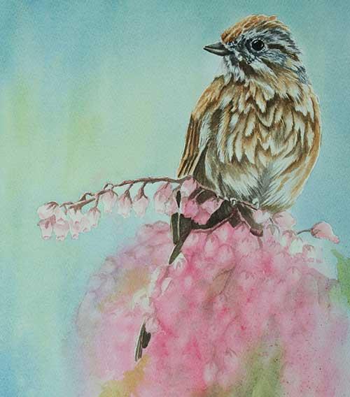 wc-sparrow-thumbnail
