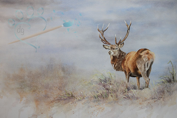 Watercolor….Red Deer